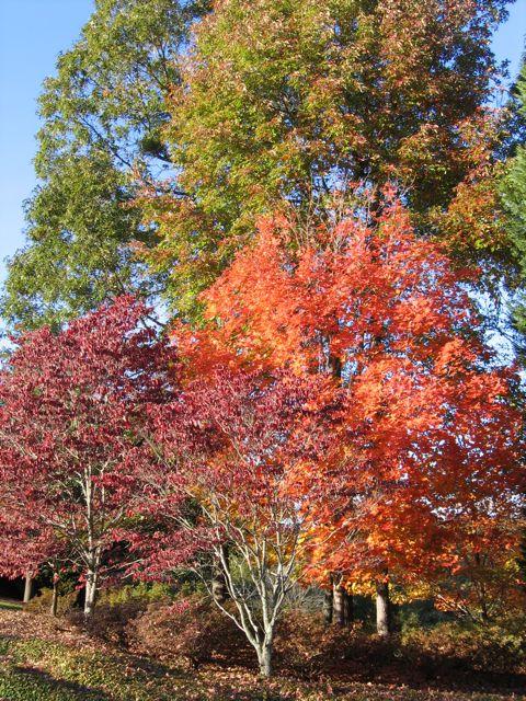 fall2008_01.jpg