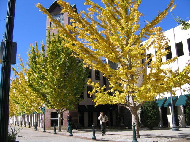 fall2008_06.jpg