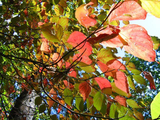 fall colors in Jones Gap SC